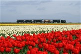 Amsterdam, Tulips, Cheese & Steam