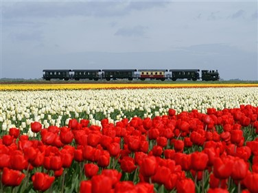 """<img src=""""steaming-through-the-tulips.jpeg""""  alt=""""Tulips and Steam Railway"""" />"""