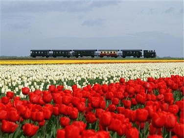 "<img src=""stoomtram1.jpeg"" alt=""Tulips and Steam Railway""/>"