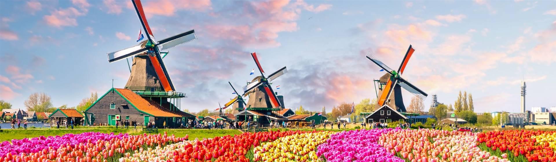 "<img src=""kuekenhof-with-windmill-©-adobestock.jpeg""  alt=""Windmills and Tulips"" />"