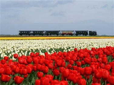 "<img src=""steaming-through-the-tulips-©-stoomtram-hoorn-medemblik.jpeg"" alt=""Steaming through the""/>"
